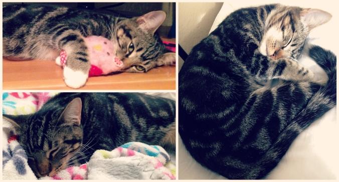 Canela the cute cat