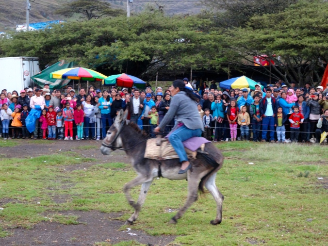 donkey race in Peru burro