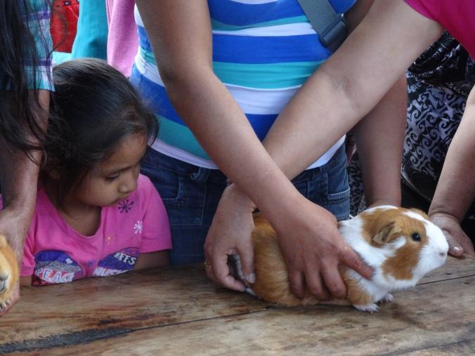 cuy guinea pig peru