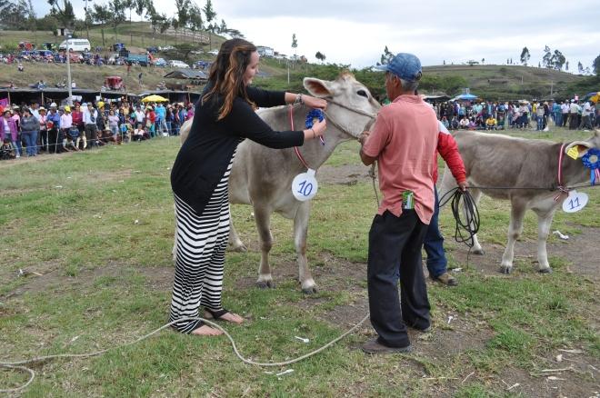 Santa Cruz Cajamarca cow pinning