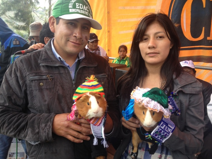 Guinea Pig beauty contest Peru