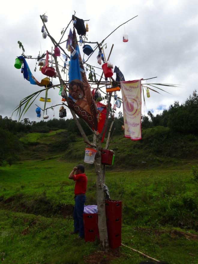 Yunza in Cajamarca, Peru