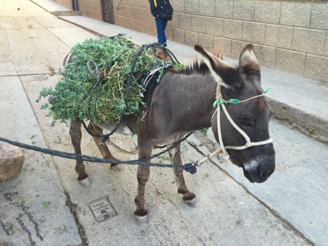 donkey carrying groceries in Peru Peace Corps Contumaza Cajamarca burro