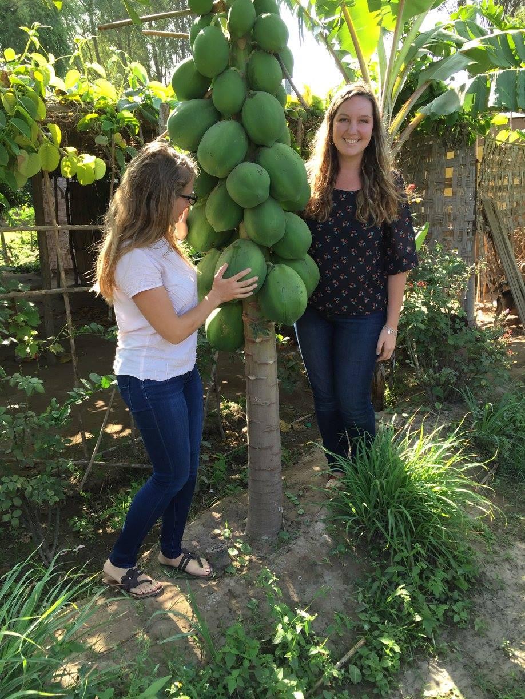 Papaya Tree in Peace Corps Peru